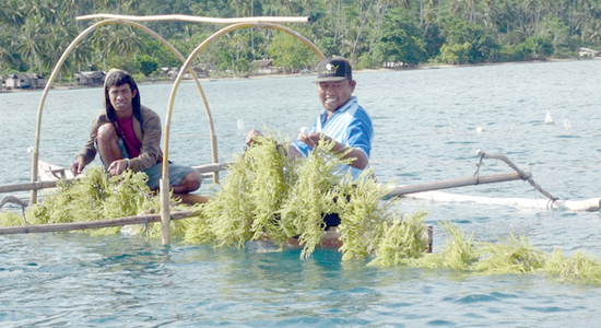 Rumput Laut Andalan Jawa Timur