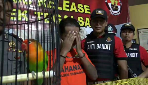 Terekam CCTV, Maling Love Bird Diringkus Polisi