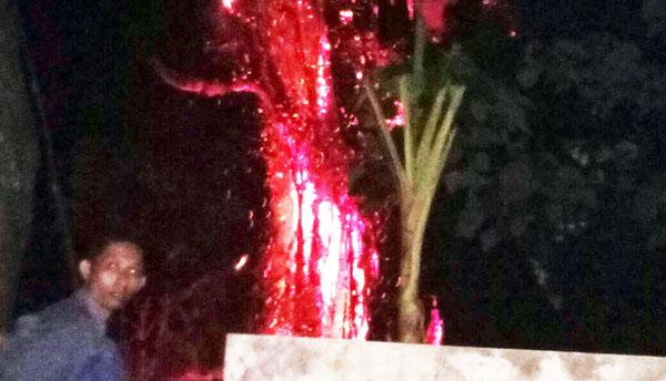Pohon Beringin Terbakar di Makam Keramat Ki Ronggo, Bikin Gempar Warga