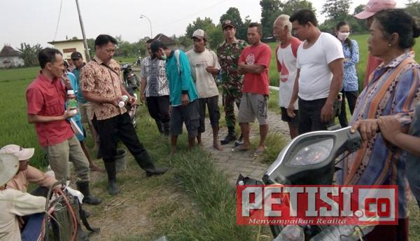Babinsa Trenggulunan dan PPL Bantu Petani Tanam Padi