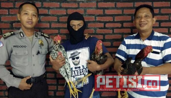 Polsek Trowulan  Ciduk  Pencuri Ayam Bangkok