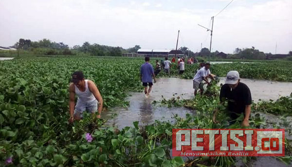 Tertutup Enceng Gondok, Warga Balongrejo Swadaya Bersihkan Jalan