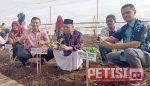 PTPN  X Kebun Ajong Gayasan Lakukan Tanam Perdana Tembakau